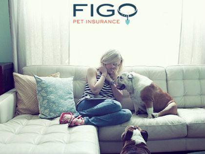 figo-pet-insurance